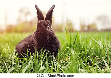 mały, czarnoskóry, niemowlę królik, posiedzenie, w, grass.,...