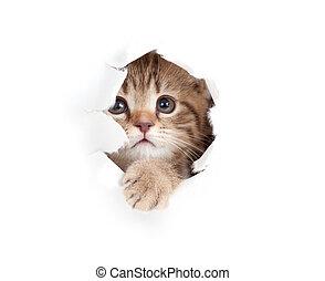 mały, do góry, porwany, odizolowany, kot, patrząc, papier, otwór, bok