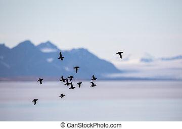 mały, gatunek ptaka, alle, alle, przelotny, w, niejaki,...