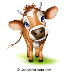 mały, jerseyska krowa