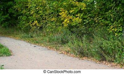 mały, kobieta, młody, jesień, park, wyścigi, aparat fotograficzny, dziewczyna