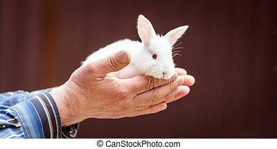 mały, królik, w, przedimek określony przed rzeczownikami, siła robocza