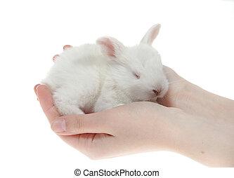 mały, króliki, w, przedimek określony przed rzeczownikami, siła robocza