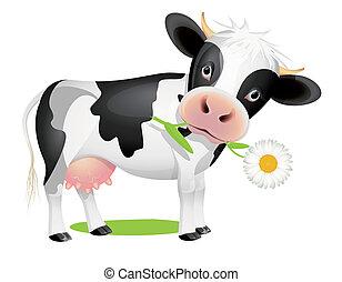 mały, krowa, jedzenie, stokrotka