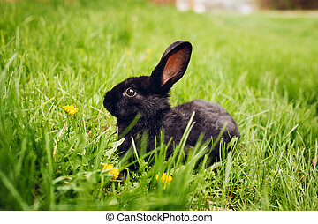 mały, posiedzenie, wiosna, krajowy, animals., grass., ...
