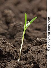 mały, roślina