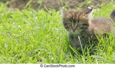 mały, trawa, kociątko