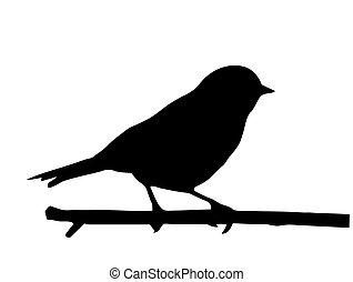 mały, wektor, sylwetka, ptak, gałąź