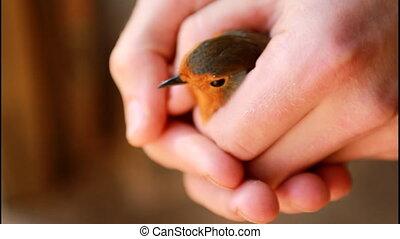 mały, wolność, ptak, udzielanie