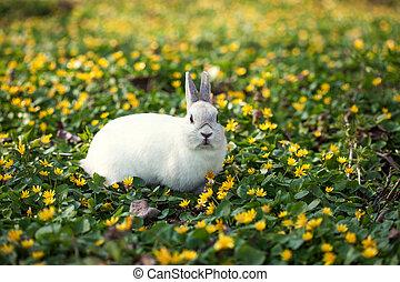 mały, zielony, rozkwiecony, piękno, kwiaty, wielkanoc, grass...