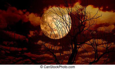 maan, boompje, in, nacht