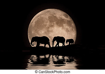 maanlicht, silhouette, gezin, olifanten