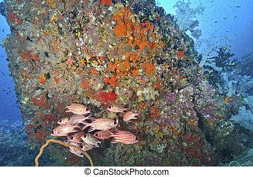 mabul, co, トロピカル, 深さ, sipadan, タイ, 海中の, 島, 珊瑚, 水生, マレーシア,...