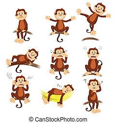 macaco, com, diferente, expressão