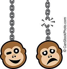 macaco, corrente