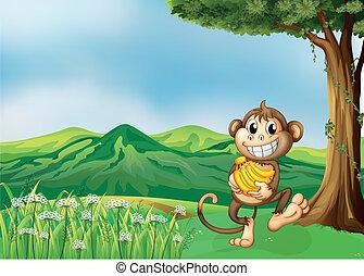 macaco, segurando,  banana