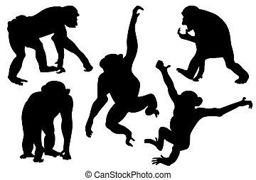 macaco, silhuetas, cobrança