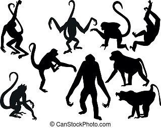 macaco, silhuetas, -, cobrar, vetorial