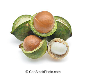 Macadamia isolated on white background