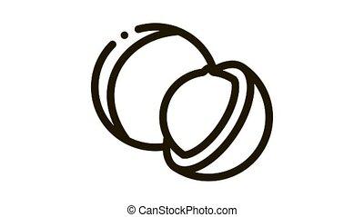 macadamia nut Icon Animation. black macadamia nut animated icon on white background