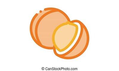 macadamia nut Icon Animation. color macadamia nut animated icon on white background