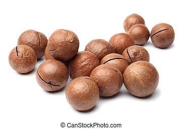 Macadamia nut on white background