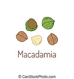 Macadamia nuts Hand drawn