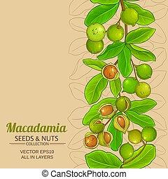 macadamia, vektor, bakgrund