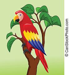 macao, uccello, cartone animato