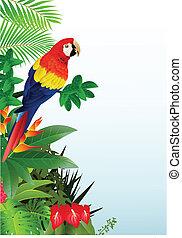 macao, uccello, foresta, tropicale