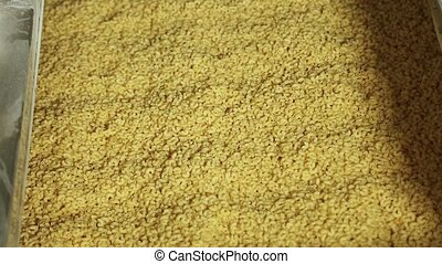 Macaroni products on the conveyor, close up. - Macaroni...