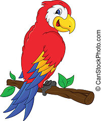 macaw bird cartoon illustration