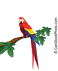 Macaw bird - Vector illustration of macaw bird