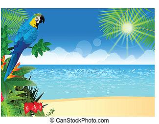 Macaw bird with tropical beach back