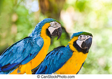 macaw birds parrot colorful of blue and yellow macaw birds on branch tree