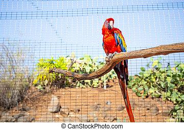 macaw, branch, papegøje, park, (ara, zoo, skarlagensrød, kontakt, dyr, macao), rød