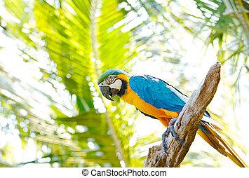 macaw, coloré, arbre