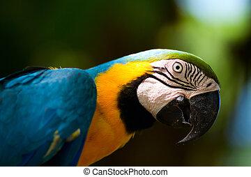 macaw, coloré, perroquet