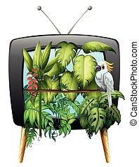macaw, jungle, oiseau