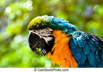 Macaw looking at camera.