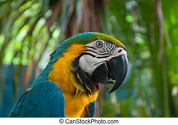 macaw, papegaai