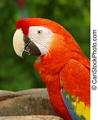 Macaw parrot (2)