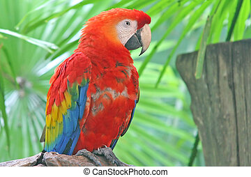 Macaw Parrot - A colorful macaw perched on a branch