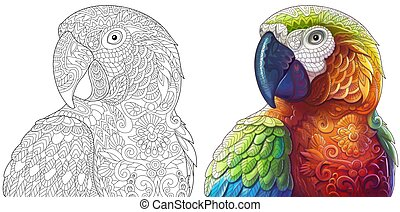 Macaw parrot coloring - Macaw parrot. Colorless and color...