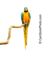 Macaw parrot on a twig