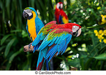 Macaw parrot on the timber