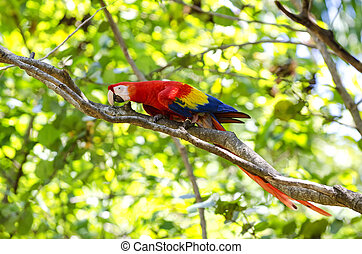 Macaw parrot with background of tropical tree
