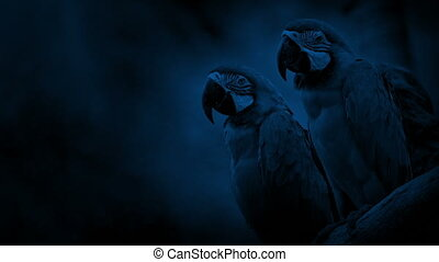 Macaw Parrots On Branch At Night - Parrots on branch in the ...