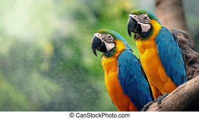 Macaw Parrots On Branch In Tropics