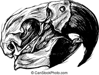 Macaw Skull Drawing line vector